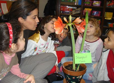 First grade class with amaryllis plant